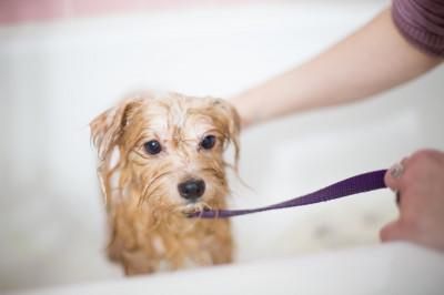 Tipps für Hundesalonbesuche