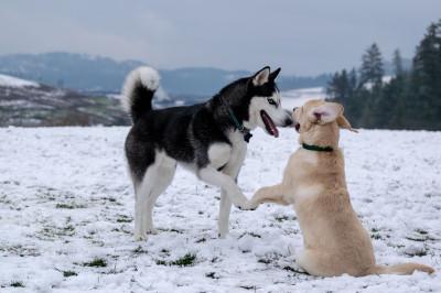 Hunderassen und Hundefellpflege