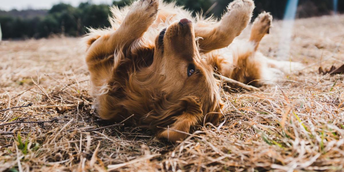 Hundefriseur werden.