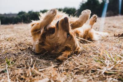 Was macht eigentlich ein Hundefriseur?