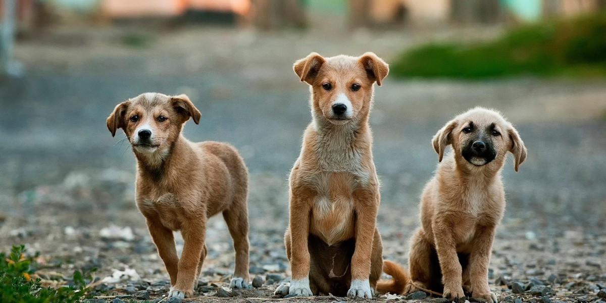 Der erste Besuch im Hundesalon