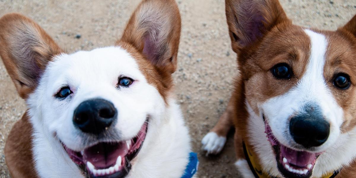 Esperanza-Maskottchen für Hunde in Not